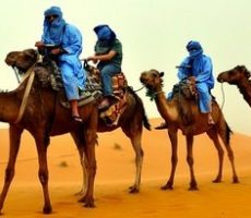 Camel trekking in the Draa Valley