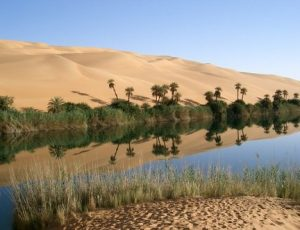 The dunes, the oases and palm-groves of Oued Draa